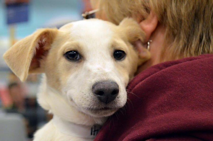 Allen County SPCA Adoptions