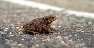 Toads on Roads